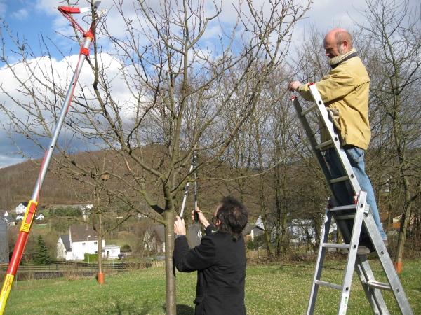 Obstbaumschnitt in Garten und Landschaft