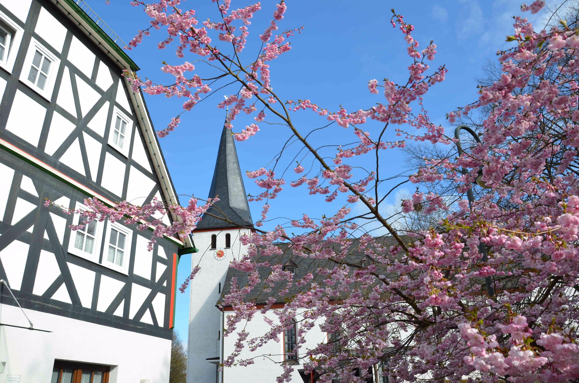 Blüten am Dorfgasthaus