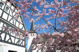 Blüten am Dorfgasthaus….