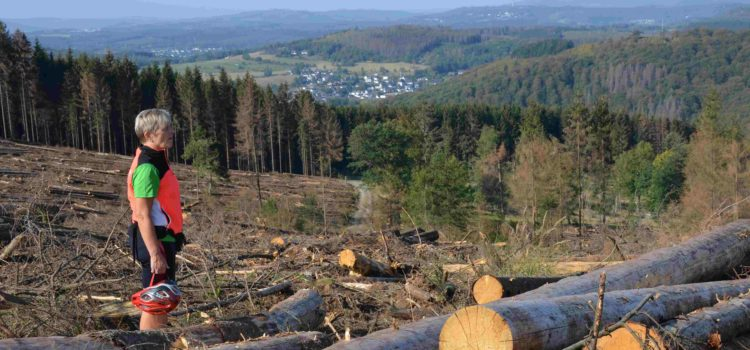 Wie kleine Insekten riesige Bäume erledigen Dramatische Ausmaße in Siegerländer Fichtenwälder